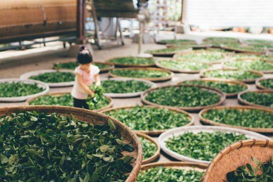 loose-leaf-green-tea